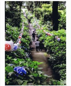 「花咲く参道」 新井辰男様 鹿沼市磯山神社